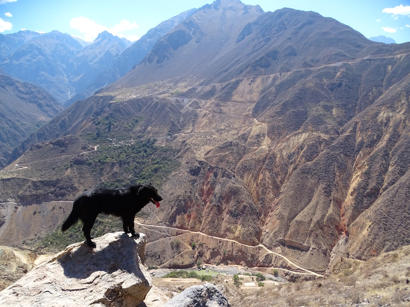 playingtheworld-perou-canyon-colca-voyage-11