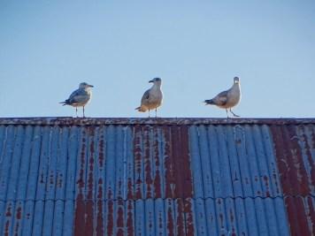 ©playingtheworld-porto-portugal-voyage-79