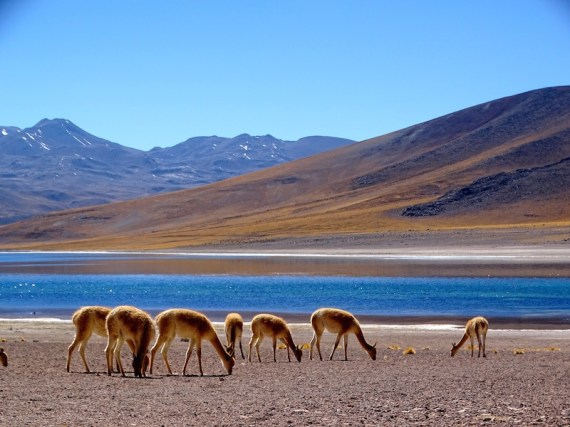 ©playingtheworld-chili-atacama-voyage-32