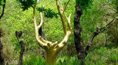 ©playingtheworld-week-end-bretagne-broceliande-menhirs-monteneuf-