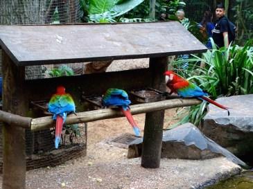 @playingtheworld-bresil-iguazu-oiseau-21