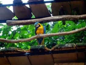 @playingtheworld-bresil-iguazu-oiseau-23