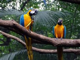 @playingtheworld-bresil-iguazu-oiseau-24