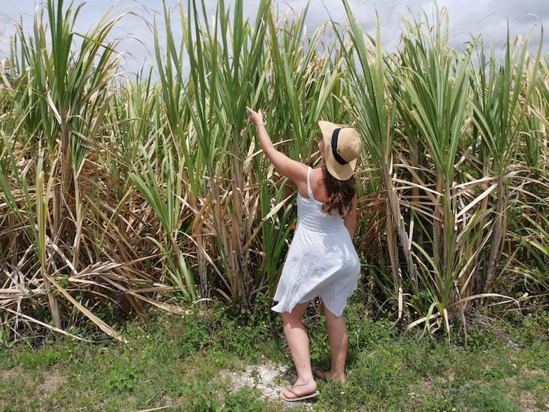 une femme se promène se dans un champ de canne à sucre