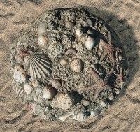 Fossil Digs Sea Shells