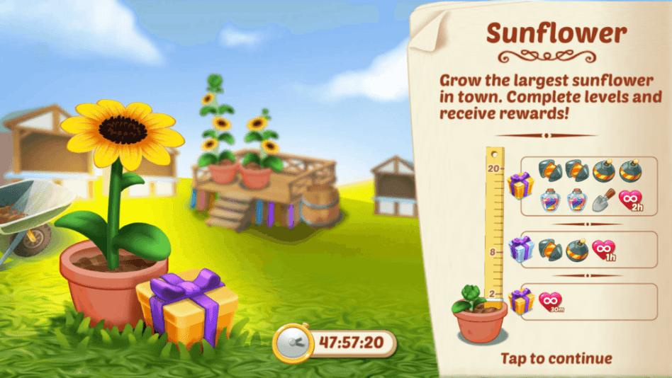 Lily's Garden Sunflower Event