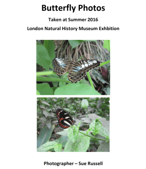 Butterfly photos