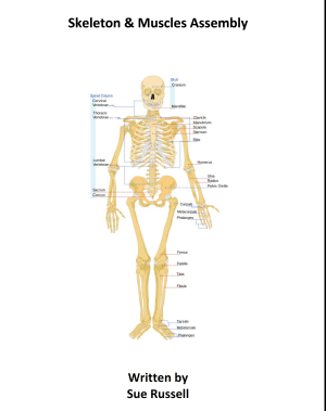 Skeleton and muscles