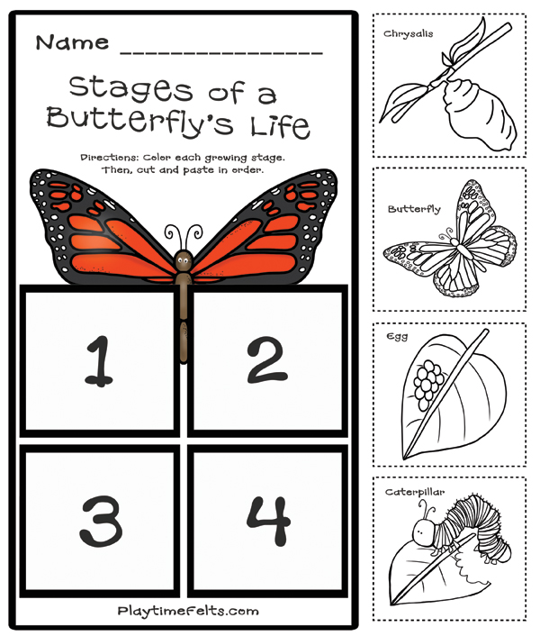 Prep-Free Butterfly Life Cycle Printables for Preschool