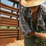 Trabajo rural: Agreden a periodista que investiga el asesinato del peón Solano