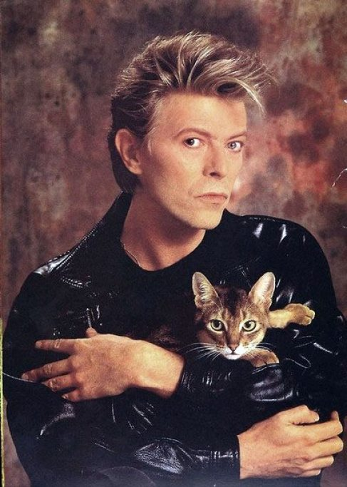 david-bowie-and-cat-katze