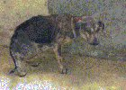 IobRdbBmGoX nMDW7pBpKeQSeh4ZLAMn593s05ZZ78Q Angels Recovery and new life. Rescued from abusive owners.