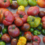 Half Moon Bay - Farmers Market (12)