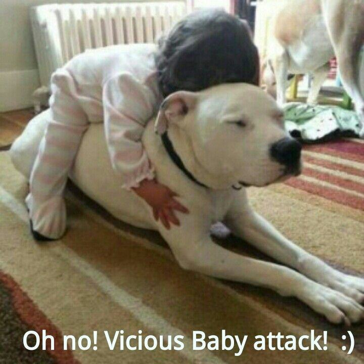24 Pictures That Prove Pit Bulls Are Nothing But Big