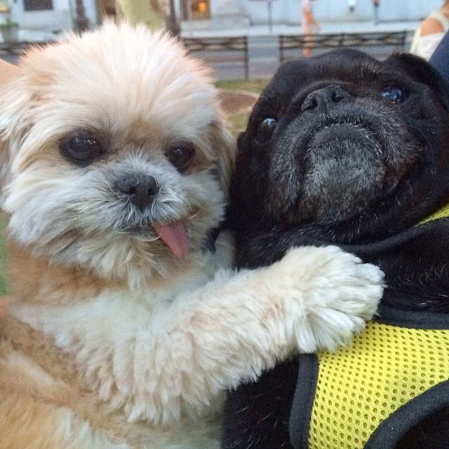 Marnie is the Goofiest Dog on the Internet 18 Pics