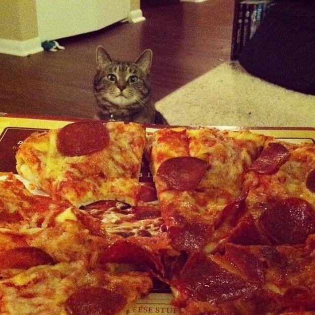 24 Animals That Are Just Begging You to Share Your Food