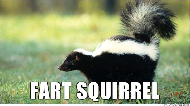 Image result for fart squirrel
