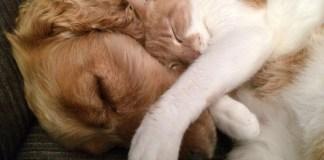 Cão e gato dormindo