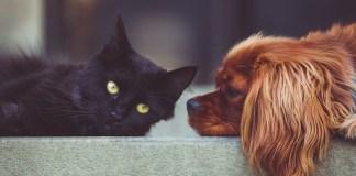 Cão e gato frente a frente