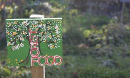 Christine's food forest