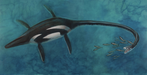 elasmosaurus debby