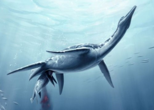 The plesiosaur Polycotylus giving birth to a single large baby