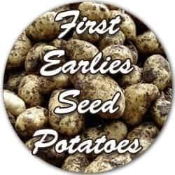 First Earlies seed potatoes