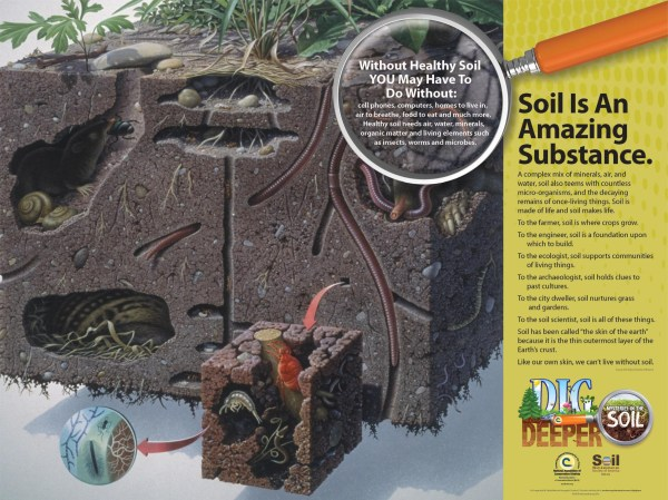 Dig Deeper Life in the Soil Project Ideas
