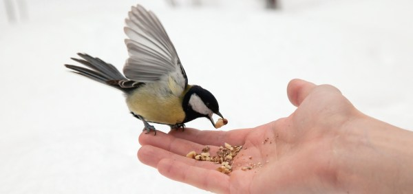 How to Feed a Bird