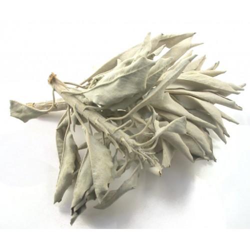 white-sage-salvia-apiana-500x500