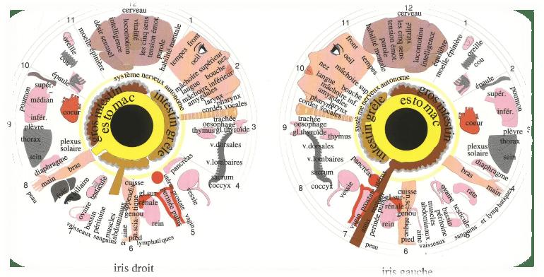 symbolique-iridologie
