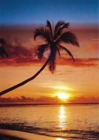 POSTER SUNSET - PALM TREE 61 X 91.5 CM