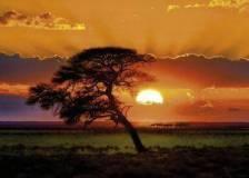 SUNNY TREE HEYE 1000 ΚΟΜΜΑΤΙΑ