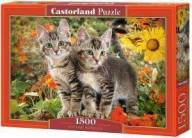 KITTEN BUDDIES CASTORLAND 1500 ΚΟΜΜΑΤΙΑ