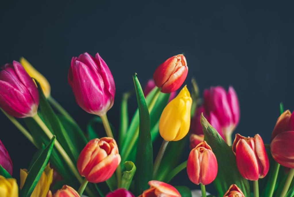 Tulpen satt   Credits: Libby Penner   Unsplash