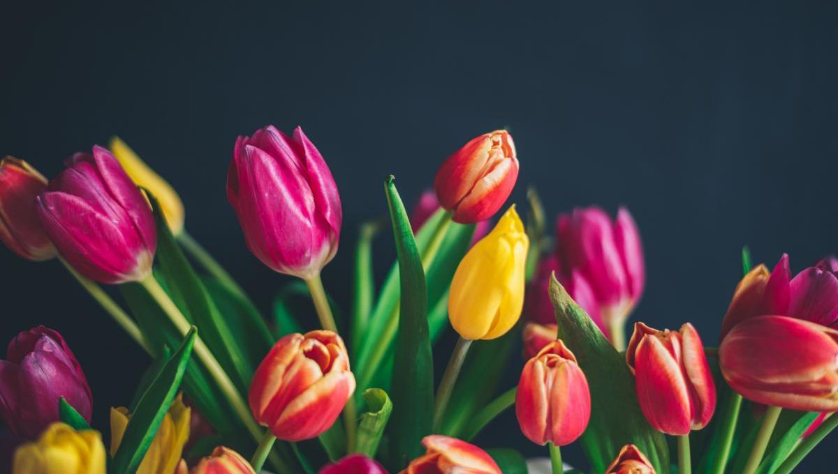 Tulpen satt | Credits: Libby Penner | Unsplash