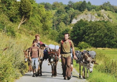 Auf den Esel gekommen: Wanderung mit grauen Vierbeinern