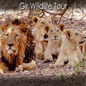 Gir Wildlife