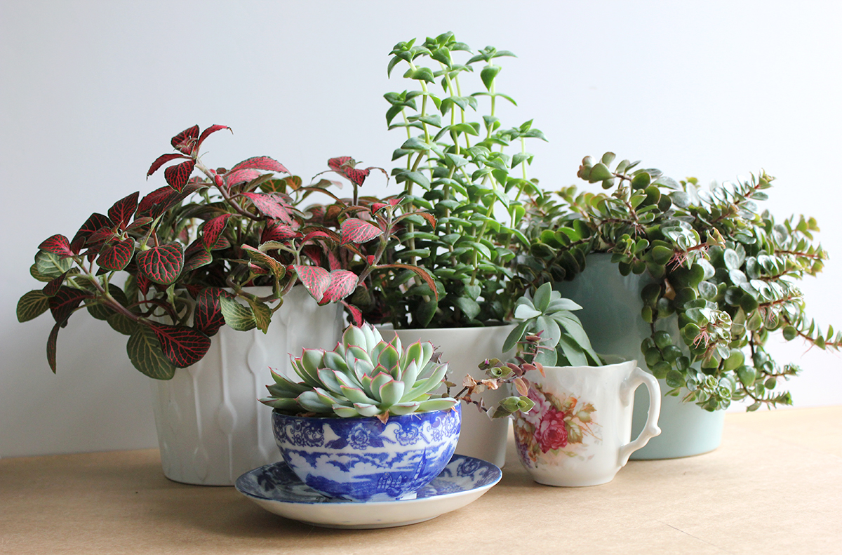 How to keep your plants happy (and fill your home with greenery)