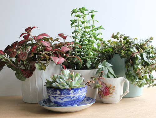 How to keep your plants happy