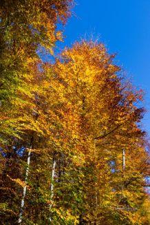 Herbst auf dem Randen