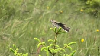 Vogel im Wind