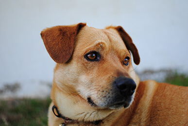 Skin Cancer Affects Dogs Too Learn How To Recognize It And Treat It Pibbles More Animal Rescue