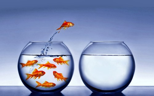 Focus on Your Strengths - PMCHAMP Blog - Fish Jumps