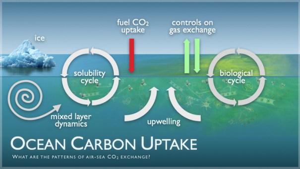 Ocean Carbon Uptake Image
