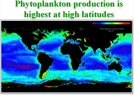 Phytoplankton production in different seas