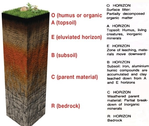 Soil profile soil horizon soil types pmf ias for Different uses of soil