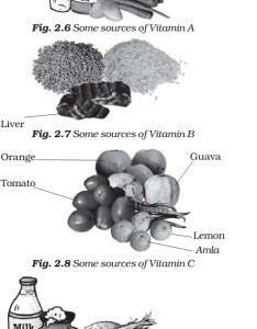 Food sources of vitamins and minerals also deficiency diseases pmf ias rh pmfias
