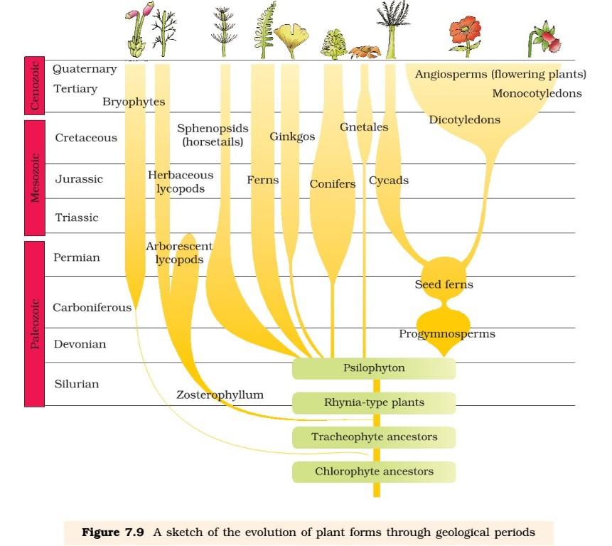 Evolution - Plants
