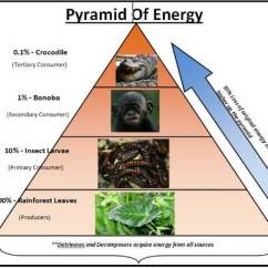 Savanna Food Chain Diagram Where Are My Kidneys Located Ecological Pyramids: Pyramid Of Numbers, Biomass & Energy | Pmf Ias